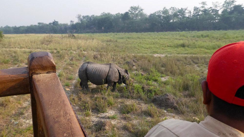 Chitwan-Nationalpark. Panzernashorn
