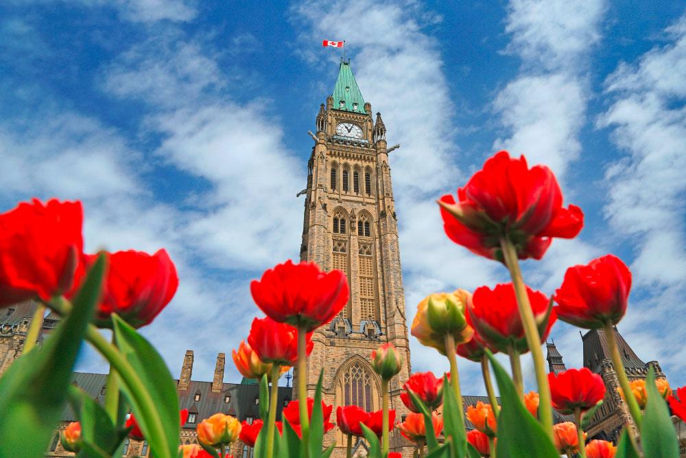Ottawa, Tulipfestival