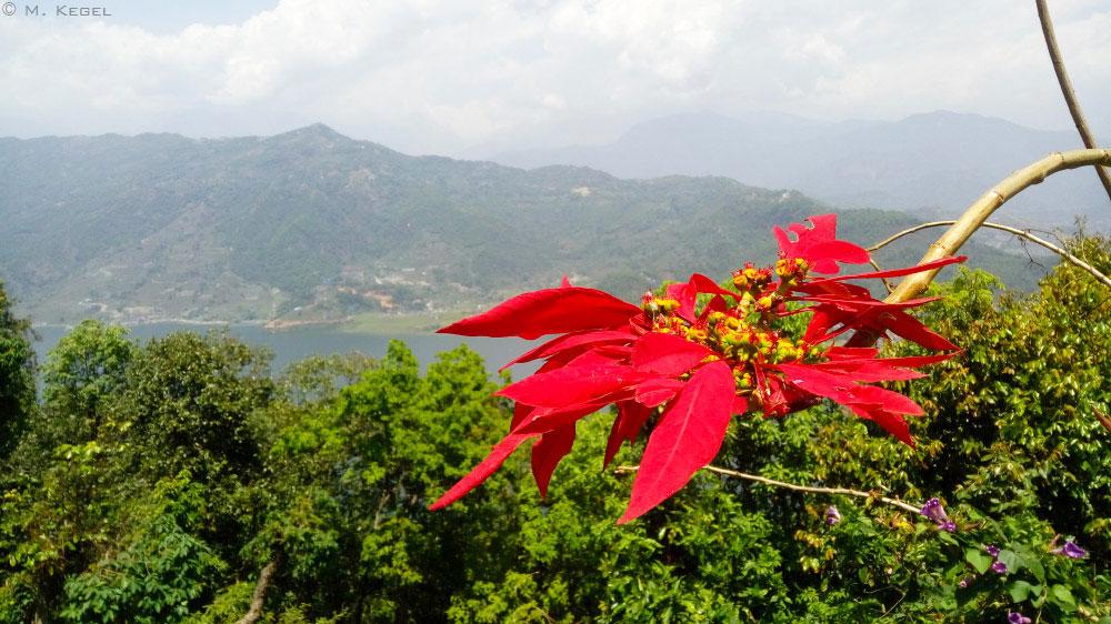 Pokhara, Aussicht über den Pewa-See, Weihnachtsstern