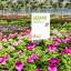 Gartenschild mit aktuellen Angeboten, z. B. in Gartencentern
